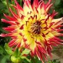 Скачать бесплатно Цветную картинку №0030 для мобильного телефона из раздела Растения, цветы, формат jpg