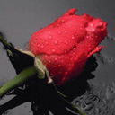 Скачать бесплатно Цветную картинку №0032 для мобильного телефона из раздела Растения, цветы, формат jpg