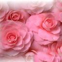Скачать бесплатно Цветную картинку №0035 для мобильного телефона из раздела Растения, цветы, формат jpg