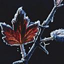 Скачать бесплатно Цветную картинку №0038 для мобильного телефона из раздела Растения, цветы, формат jpg