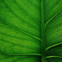 Скачать бесплатно Цветную картинку №0044 для мобильного телефона из раздела Растения, цветы, формат jpg