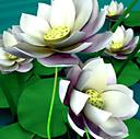 Скачать бесплатно Цветную картинку №0045 для мобильного телефона из раздела Растения, цветы, формат jpg