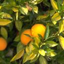 Скачать бесплатно Цветную картинку №0050 для мобильного телефона из раздела Растения, цветы, формат jpg