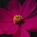 Скачать бесплатно Цветную картинку №0053 для мобильного телефона из раздела Растения, цветы, формат jpg