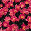 Скачать бесплатно Цветную картинку №0055 для мобильного телефона из раздела Растения, цветы, формат jpg