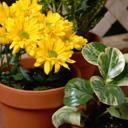 Скачать бесплатно Цветную картинку №0057 для мобильного телефона из раздела Растения, цветы, формат jpg