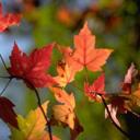 Скачать бесплатно Цветную картинку №0059 для мобильного телефона из раздела Растения, цветы, формат jpg