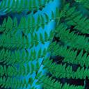 Скачать бесплатно Цветную картинку №0060 для мобильного телефона из раздела Растения, цветы, формат jpg