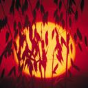 Скачать бесплатно Цветную картинку №0065 для мобильного телефона из раздела Растения, цветы, формат jpg