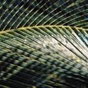 Скачать бесплатно Цветную картинку №0067 для мобильного телефона из раздела Растения, цветы, формат jpg
