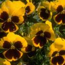 Скачать бесплатно Цветную картинку №0069 для мобильного телефона из раздела Растения, цветы, формат jpg