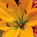 Скачать бесплатно Цветную картинку №0071 для мобильного телефона из раздела Растения, цветы, формат jpg