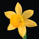 Скачать бесплатно Цветную картинку №0073 для мобильного телефона из раздела Растения, цветы, формат jpg