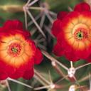 Скачать бесплатно Цветную картинку №0075 для мобильного телефона из раздела Растения, цветы, формат jpg