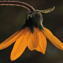 Скачать бесплатно Цветную картинку №0076 для мобильного телефона из раздела Растения, цветы, формат jpg