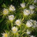 Скачать бесплатно Цветную картинку №0077 для мобильного телефона из раздела Растения, цветы, формат jpg