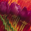 Скачать бесплатно Цветную картинку №0079 для мобильного телефона из раздела Растения, цветы, формат jpg