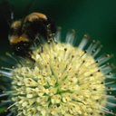 Скачать бесплатно Цветную картинку №0085 для мобильного телефона из раздела Растения, цветы, формат jpg