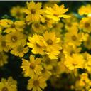 Скачать бесплатно Цветную картинку №0086 для мобильного телефона из раздела Растения, цветы, формат jpg