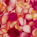 Скачать бесплатно Цветную картинку №0089 для мобильного телефона из раздела Растения, цветы, формат jpg