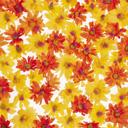 Скачать бесплатно Цветную картинку №0090 для мобильного телефона из раздела Растения, цветы, формат jpg