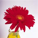 Скачать бесплатно Цветную картинку №0091 для мобильного телефона из раздела Растения, цветы, формат jpg