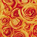 Скачать бесплатно Цветную картинку №0092 для мобильного телефона из раздела Растения, цветы, формат jpg