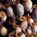 Скачать бесплатно Цветную картинку №0096 для мобильного телефона из раздела Растения, цветы, формат jpg
