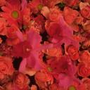 Скачать бесплатно Цветную картинку №0097 для мобильного телефона из раздела Растения, цветы, формат jpg