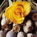 Скачать бесплатно Цветную картинку №0098 для мобильного телефона из раздела Растения, цветы, формат jpg
