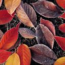 Скачать бесплатно Цветную картинку №0101 для мобильного телефона из раздела Растения, цветы, формат jpg