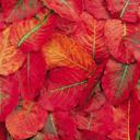 Скачать бесплатно Цветную картинку №0102 для мобильного телефона из раздела Растения, цветы, формат jpg