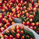 Скачать бесплатно Цветную картинку №0106 для мобильного телефона из раздела Растения, цветы, формат jpg