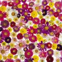 Скачать бесплатно Цветную картинку №0107 для мобильного телефона из раздела Растения, цветы, формат jpg