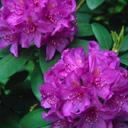 Скачать бесплатно Цветную картинку №0112 для мобильного телефона из раздела Растения, цветы, формат jpg