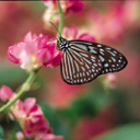 Скачать бесплатно Цветную картинку №0113 для мобильного телефона из раздела Растения, цветы, формат jpg