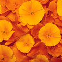 Скачать бесплатно Цветную картинку №0115 для мобильного телефона из раздела Растения, цветы, формат jpg
