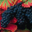 Скачать бесплатно Цветную картинку №0117 для мобильного телефона из раздела Растения, цветы, формат jpg