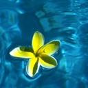 Скачать бесплатно Цветную картинку №0118 для мобильного телефона из раздела Растения, цветы, формат jpg