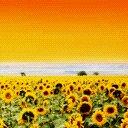Скачать бесплатно Цветную картинку №0120 для мобильного телефона из раздела Растения, цветы, формат jpg