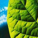 Скачать бесплатно Цветную картинку №0138 для мобильного телефона из раздела Растения, цветы, формат jpg