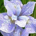 Скачать бесплатно Цветную картинку №0152 для мобильного телефона из раздела Растения, цветы, формат jpg