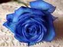 Скачать бесплатно Цветную картинку №0153 для мобильного телефона из раздела Растения, цветы, формат jpg