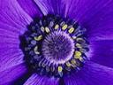 Скачать бесплатно Цветную картинку №0155 для мобильного телефона из раздела Растения, цветы, формат jpg