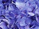 Скачать бесплатно Цветную картинку №0156 для мобильного телефона из раздела Растения, цветы, формат jpg