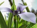 Скачать бесплатно Цветную картинку №0157 для мобильного телефона из раздела Растения, цветы, формат jpg
