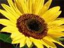 Скачать бесплатно Цветную картинку №0159 для мобильного телефона из раздела Растения, цветы, формат jpg