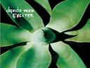 Скачать бесплатно Цветную картинку №0161 для мобильного телефона из раздела Растения, цветы, формат jpg