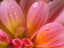 Скачать бесплатно Цветную картинку №0162 для мобильного телефона из раздела Растения, цветы, формат jpg