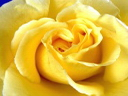 Скачать бесплатно Цветную картинку №0165 для мобильного телефона из раздела Растения, цветы, формат jpg